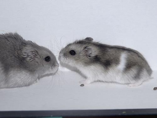 Lilou et Smirnoff