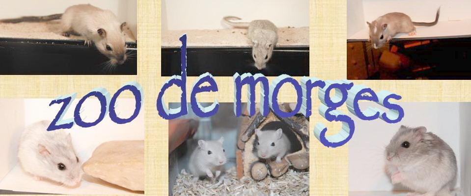Le Zoo de Morges